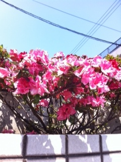 blog0519_2.JPG